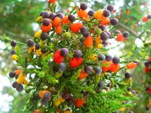 Árbol de diferentes tipos de frutas