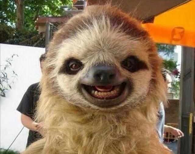 Perezoso sonriendo, consejo para dejar de ser perezoso.