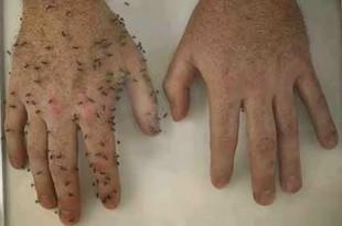 repelente natural de mosquitos y hormigas