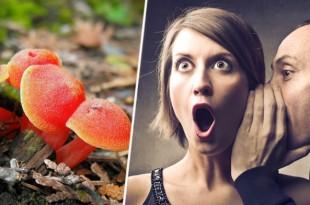 El aroma de este hongo puede provocar orgasmos en las mujeres.