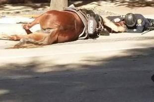 La impactante imagen del policía consolando a su caballo