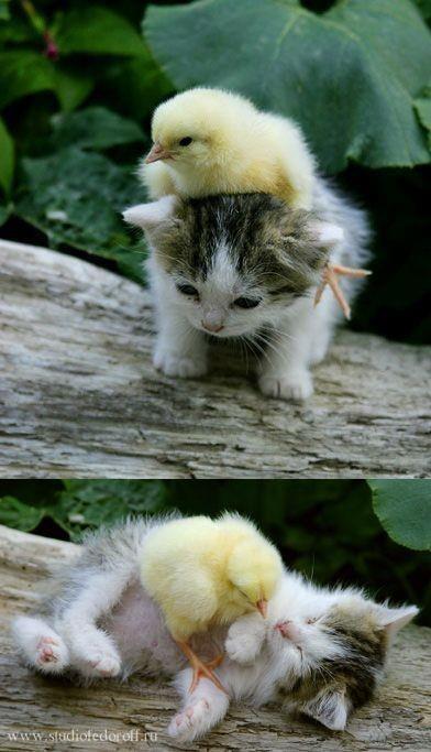 imagenes graciosas de animales