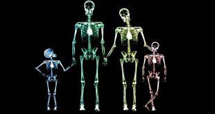 huesos tiene el cuerpo humano