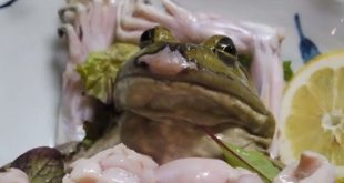 animales que se comen vivos