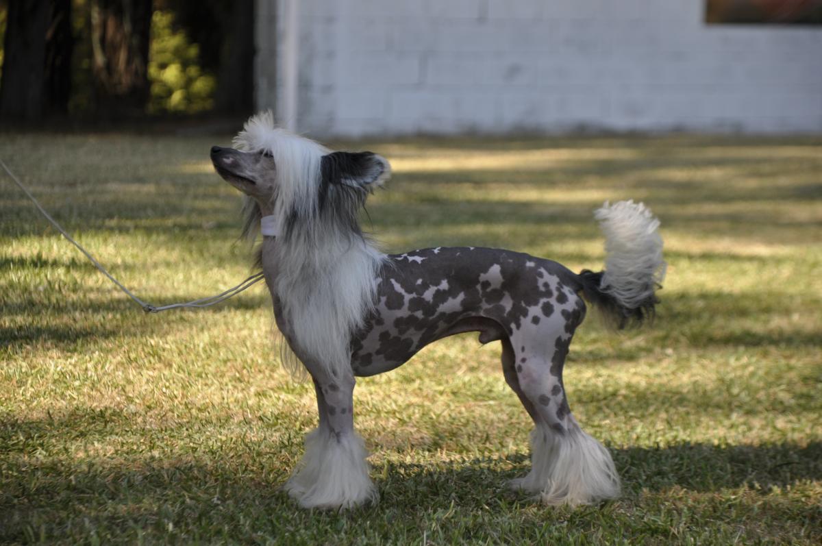 razas de perro exóticas
