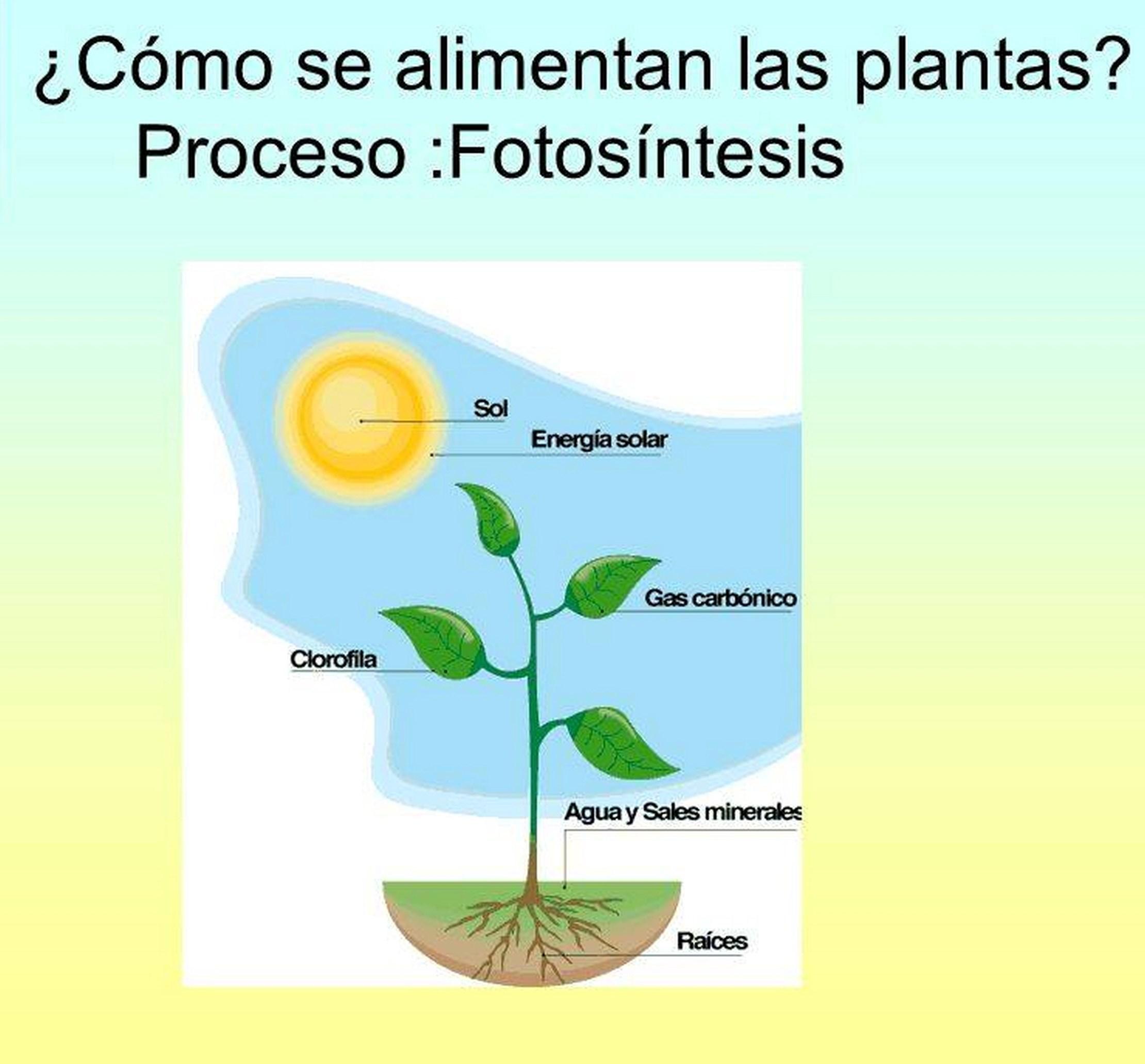 cómo respiran las plantas