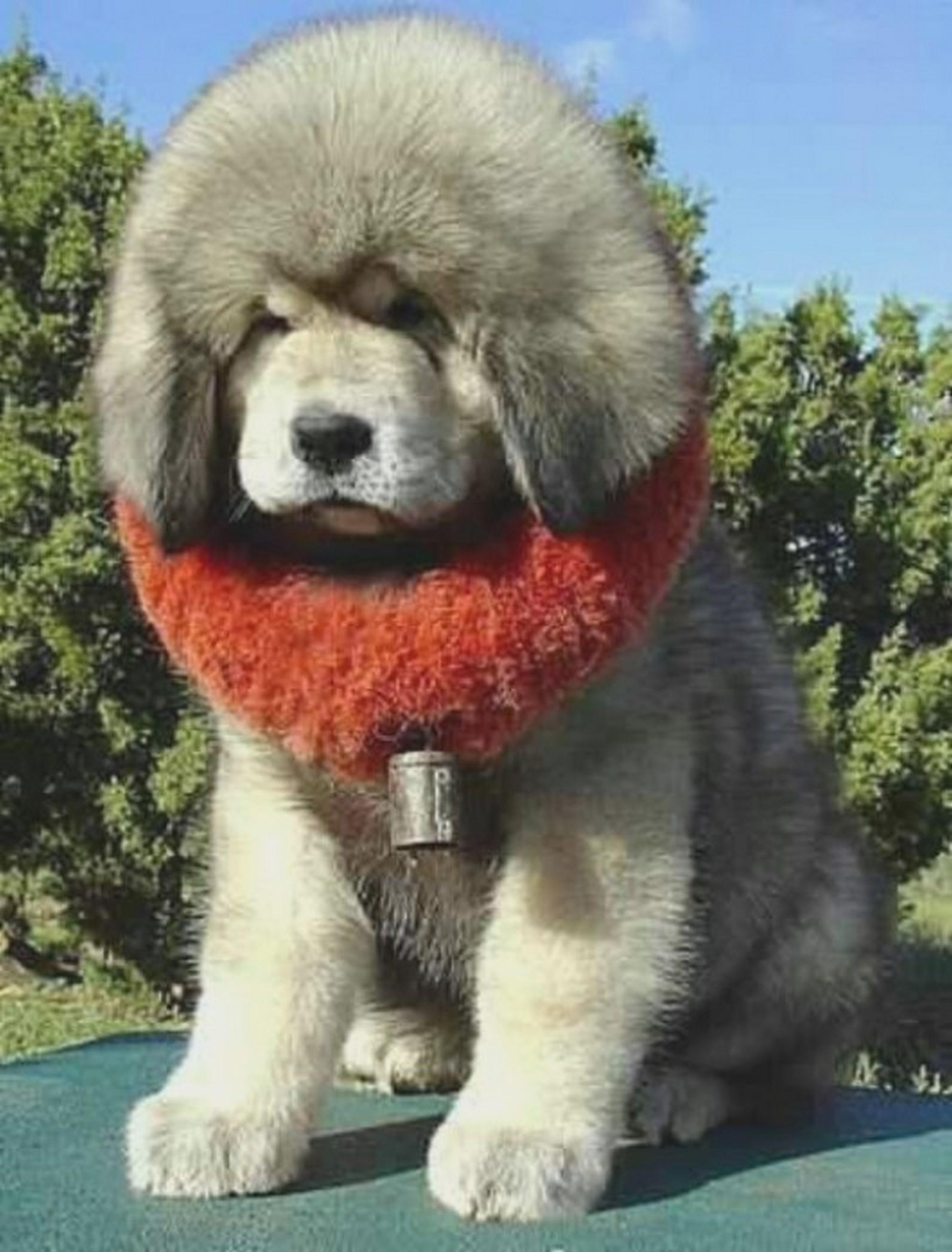 El perro más caro del mundo