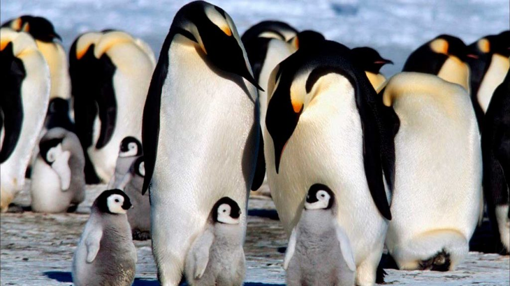 Animales del Polo Norte