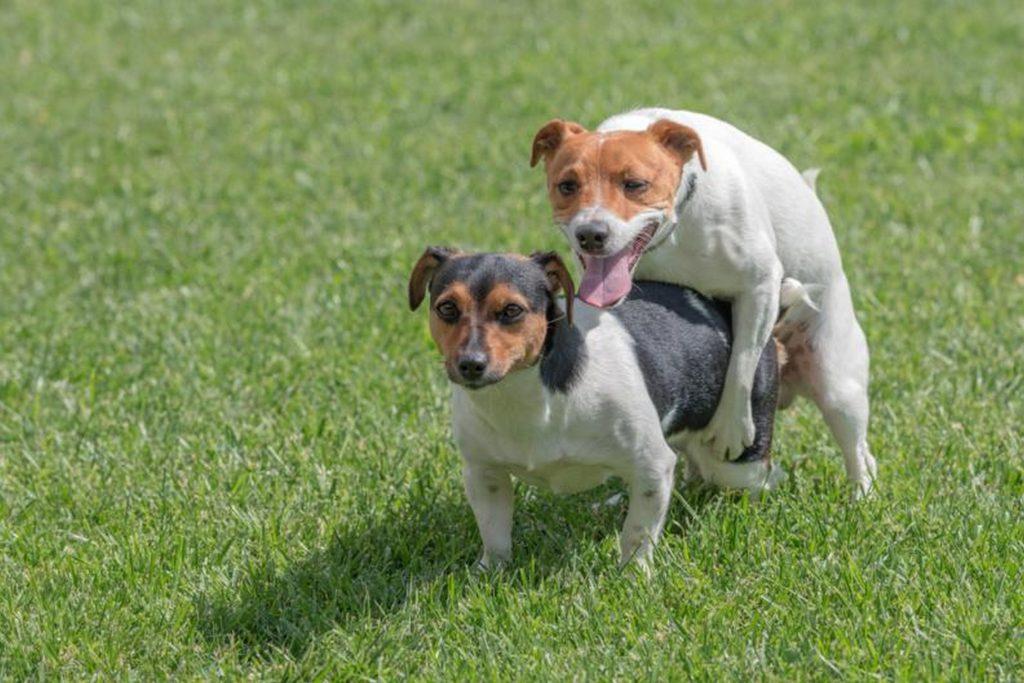 Por Qué Los Perros Se Quedan Pegados
